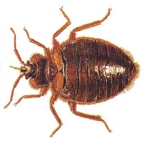 Winnipeg Bed Bugs